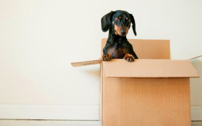 Smart Packing Tips For Any Kind Of Local Or Long Distance Move In The Lowcountry